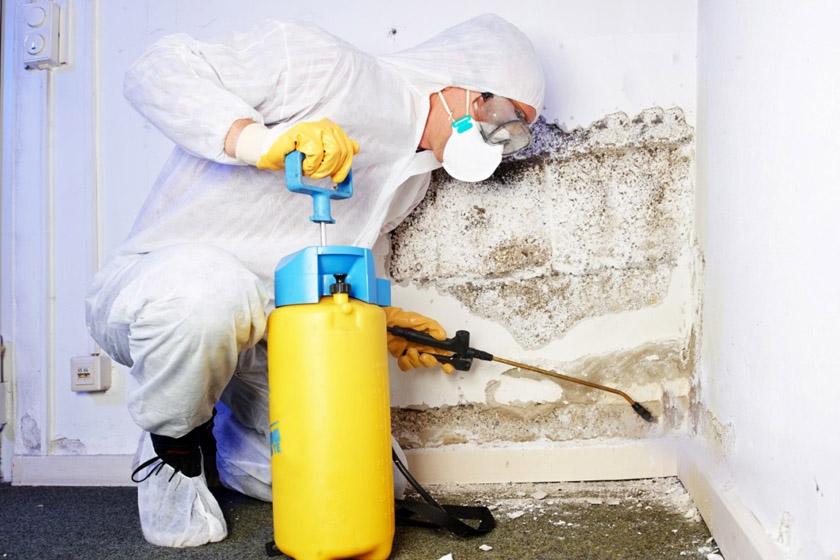 Почему плесень и микробы опасны