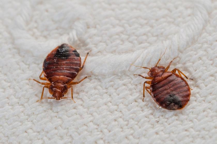 Гибель насекомых
